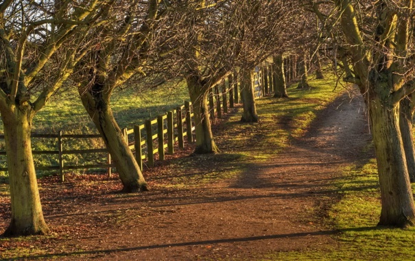 Фото обои дорога, деревья, забор