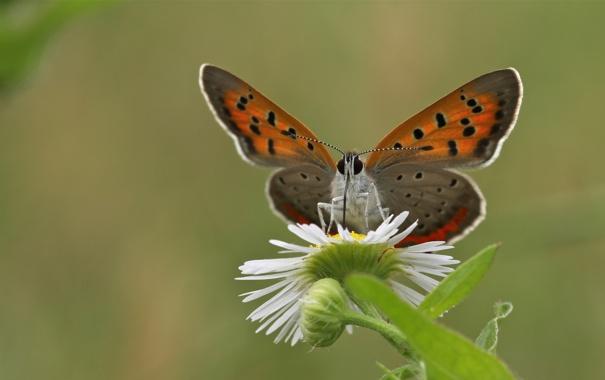 Фото бабочка крылья цветок мотылек