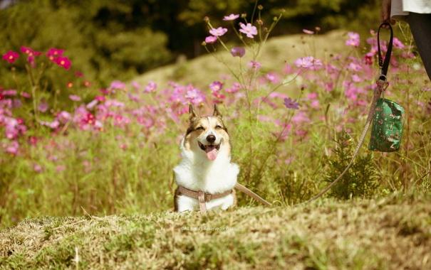 Фото обои лето, друг, собака, прогулка