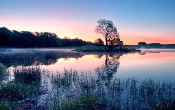 Фото обои закат, туман, озеро, дерево