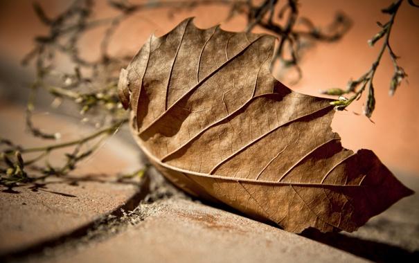 Фото обои макро, природа, лист