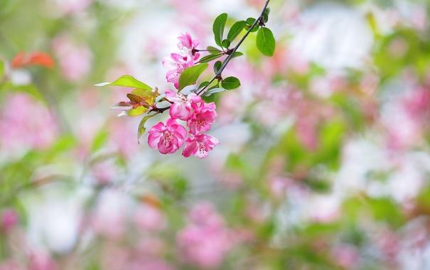Фото обои листья, цветы, фон, ветка, розовые