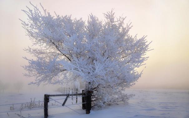 Фото обои зима, пейзаж, туман, забор, утро