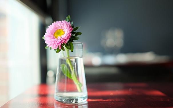 Фото обои цветок, фон, комната
