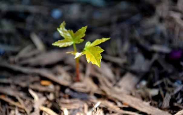 Фото обои лес, макро, лист, зеленый