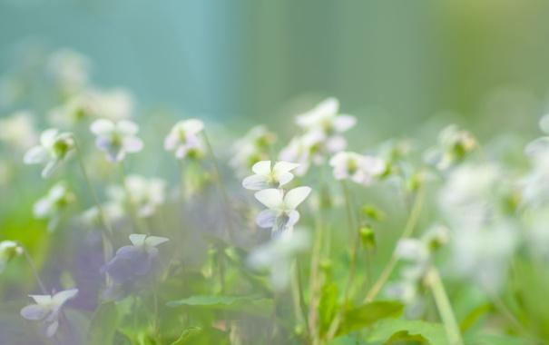 Фото обои зелень, макро, цветы, природа, легкость, растения, весна