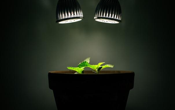 Фото обои свет, лампы, растения, горшок