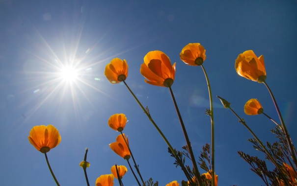 Фото обои природа, небо, цветы