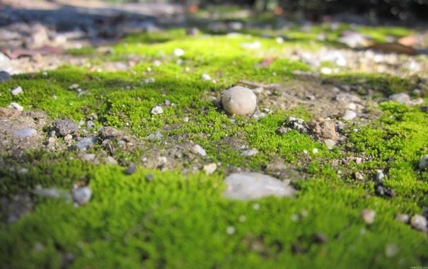 Фото обои зелень, трава, макро, природа, камни, земля