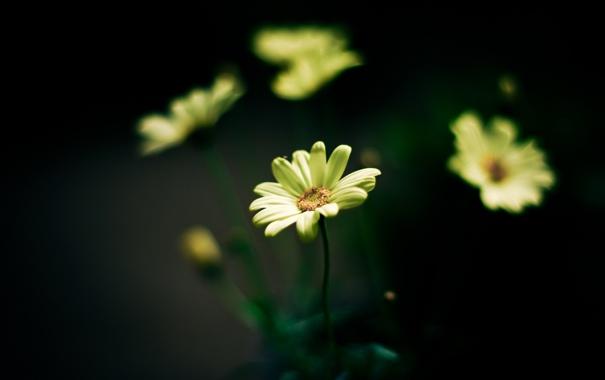 Фото обои цветок, цветы, фон, желтые