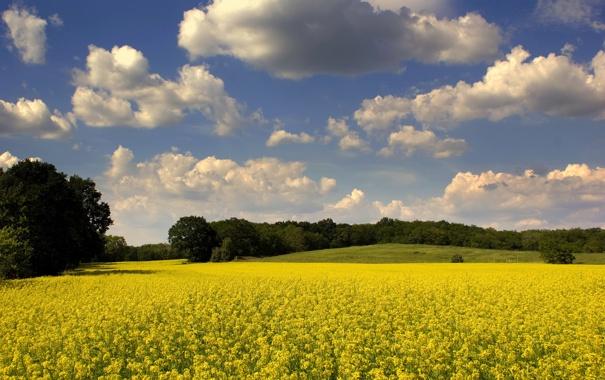 Фото обои поле, осень, деревья, природа, обои