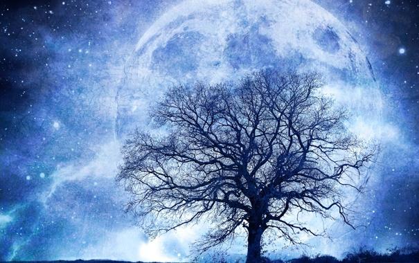 Фото обои поле, звезды, ночь, сияние, дерево, планета