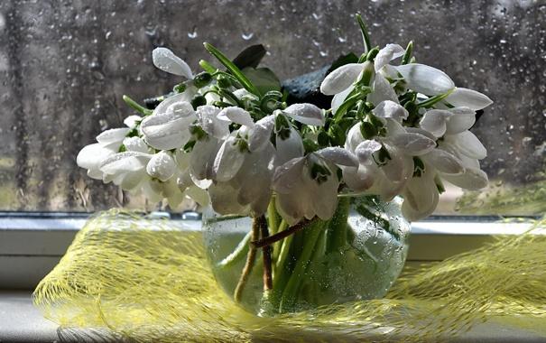 Фото обои вода, цветы, дождь, букет, весна, подснежники, натюрморт