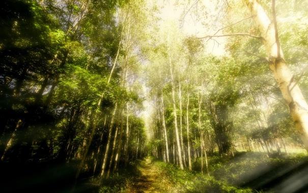 Фото обои forest, sunlight, Forestwalks