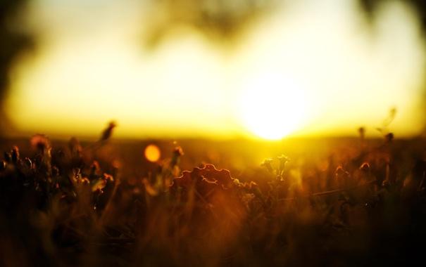 Фото обои трава, солнце, макро, закат, природа, травка, 2560x1600