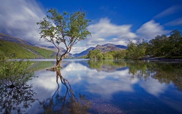 Фото обои небо, облака, горы, озеро, дерево
