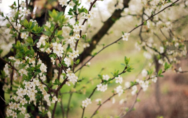 Фото обои природа, весна, сад, деревья