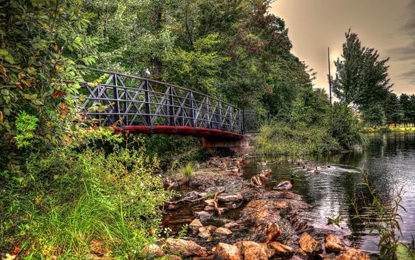 Фото обои небо, деревья, мост, река, камни, утка