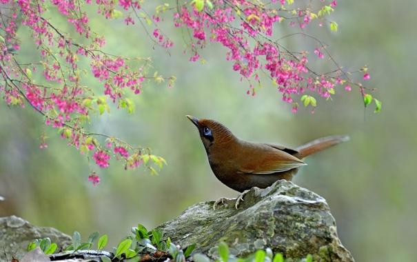 Цветы птица млечник 149