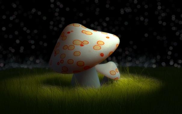 Фото обои ночь, гриб, мухомор, полянка