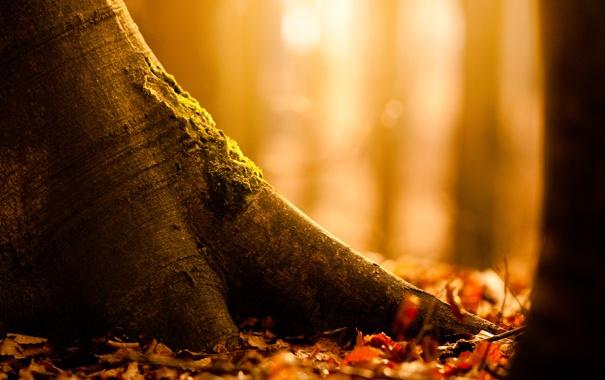 Фото обои природа, осень, листва, дерево