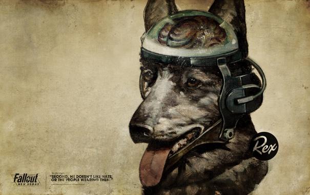 Фото обои пес, мозг, Fallout, New Vegas, Rex