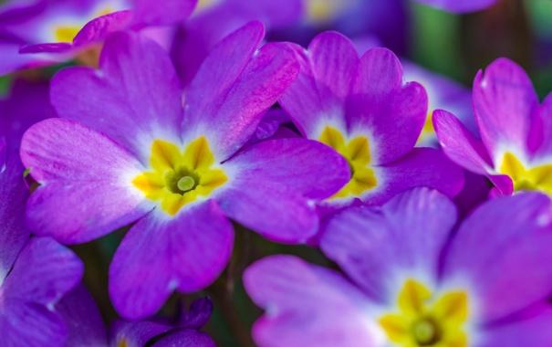 Фото обои цветы, ковер, лепестки, клумба