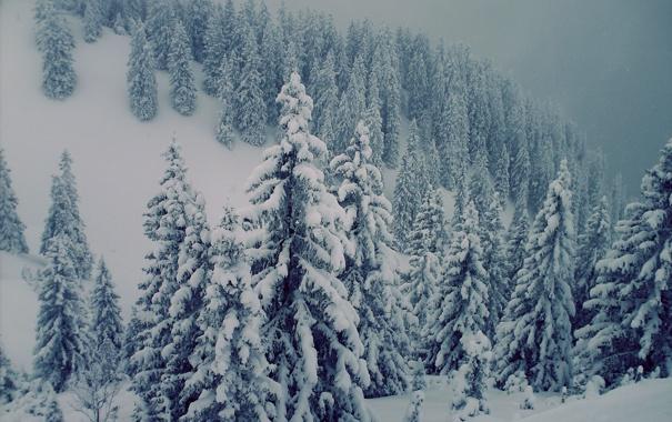 Фото обои снег, елки, Горы, красиво, сосны, буран, швецария