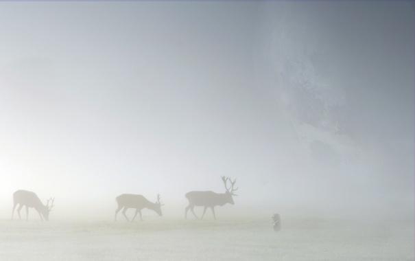 Фото обои животные, трава, туман, пейзажи, олени, лоси, ёжик в тумане
