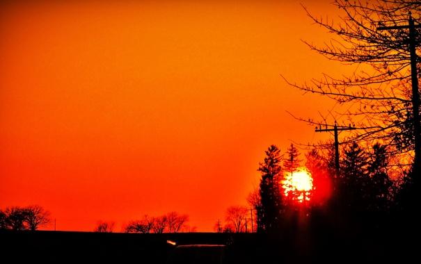 Фото обои небо, солнце, деревья, закат, силуэт