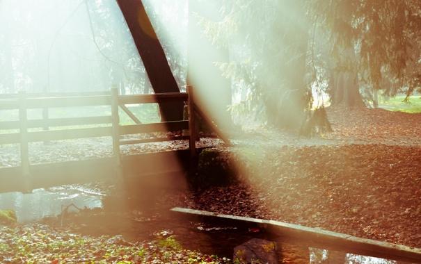 Фото обои свет, мост, природа, туман, парк