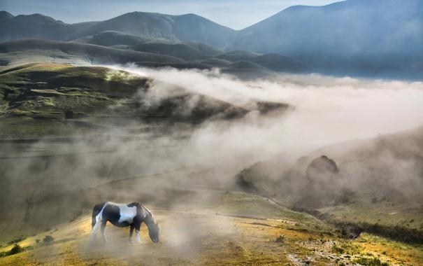 Фото обои небо, туман, дерево, холмы, лошадь, поля, утро