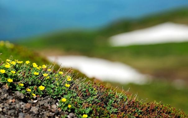 Фото обои зелень, поле, трава, листья, свет, земля, стебли