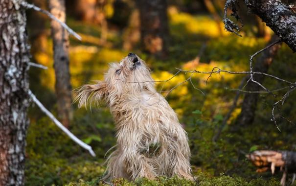 Фото обои друг, лес, пес, собака
