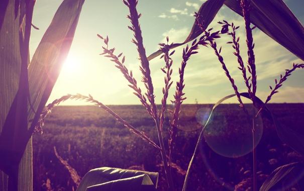 Фото обои поле, цвета, солнце, лучи, свет, природа, фото