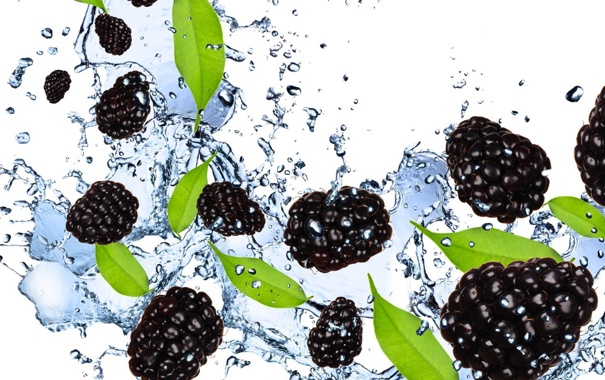 Фото обои вода, брызги, ягоды, белый фон, ежевика, blackberry