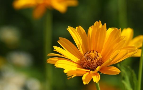 Фото обои макро, цветы, природа, фото, фон, обои, растение