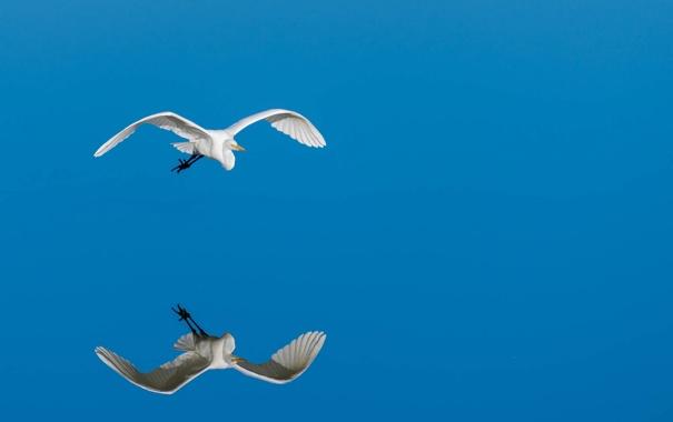 Фото обои птица, полёт, отрожение