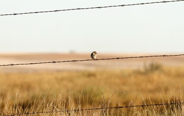 Фото обои забор, проволока, минимализм, воробей