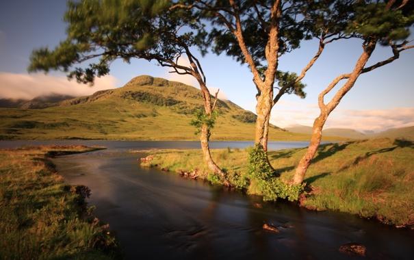 Фото обои природа, пейзаж, река, деревья