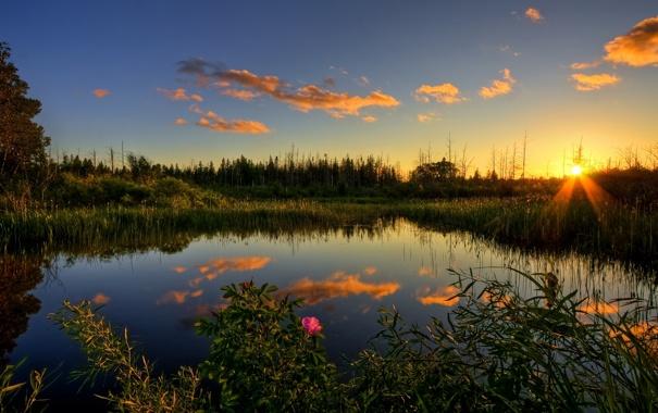 Фото обои закат, лес, осень, пруд, камыш, шиповник
