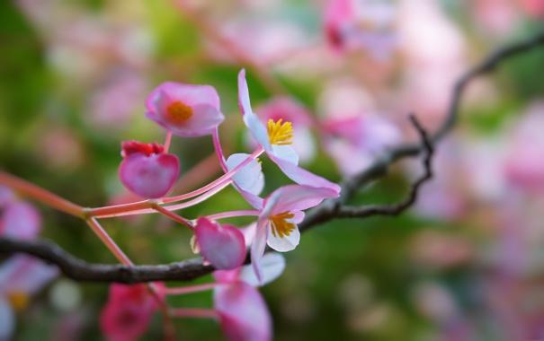 Фото обои цветы, ветки, дерево