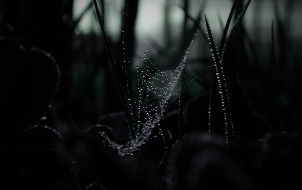Фото обои капли, паутина, трава