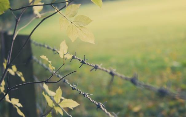 Фото обои листья, дерево, забор, проволока