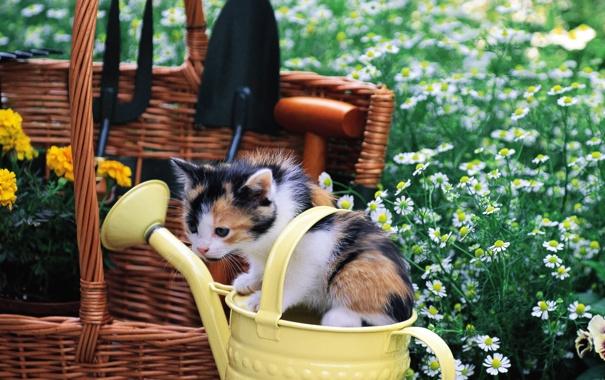 Фото обои кошка, трава, кот, цветы, котенок, корзина, киска