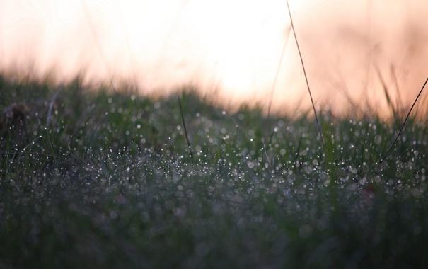 Фото обои трава, цвета, капли, роса, блики, фон, обои