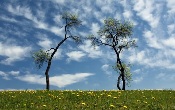 Фото обои зелень, небо, трава, облака, цветы, поляна, одуванчики