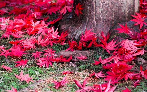 Фото обои осень, листья, природа, дерево