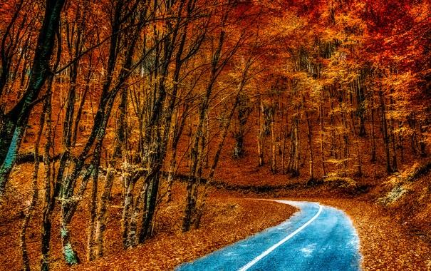 Фото обои дорога, осень, лес, листья, деревья