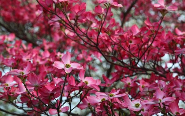 Фото обои цветы, природа, фото, красота, весна